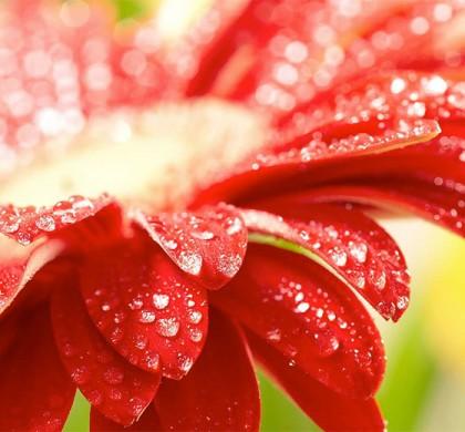 La vida de las flores